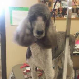 All Paws ABQ NM Pet Groomer Photo